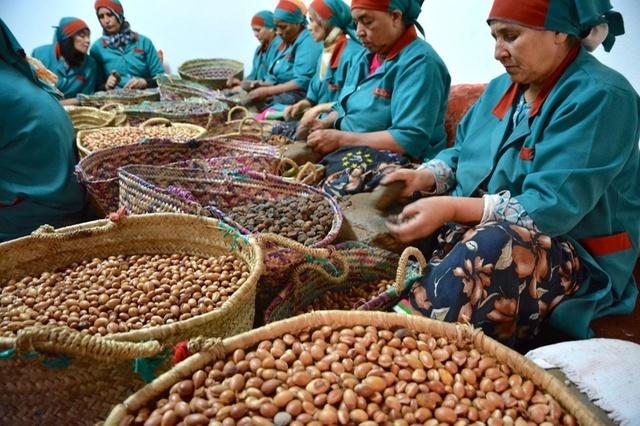 Mujeres bereberes de Marruecos con Argán