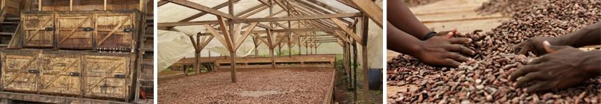 Proceso de secado del cacao